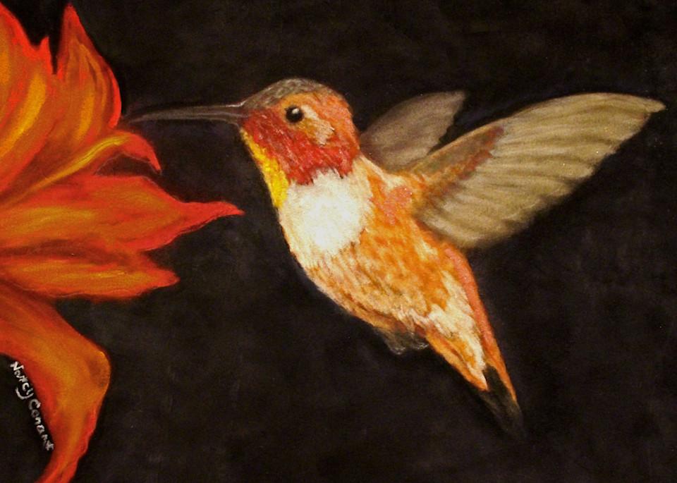 Rufous Hummingbird by Nancy Conant
