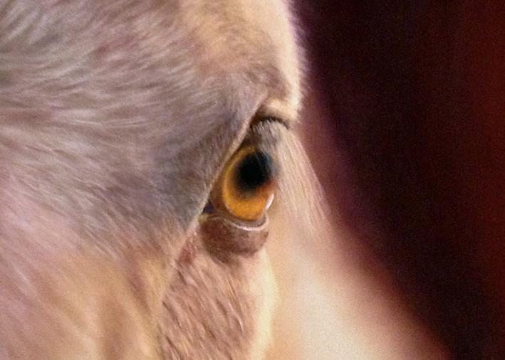 Horse Eye by Nancy Conant