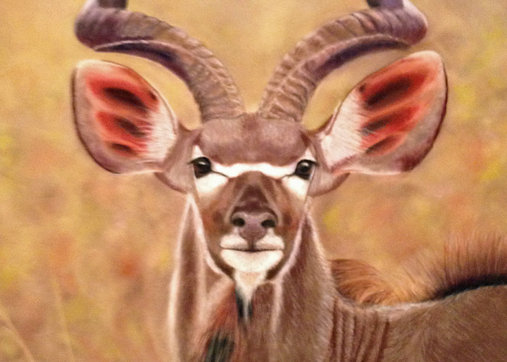 Greater African Kudu is On Alert by Nancy Conant