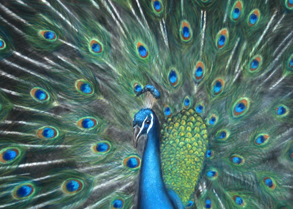 Peacock painting by Nancy Conant
