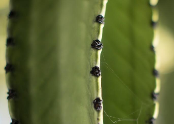 California Cactus 2 Photography Art | TERESA BERG PHOTOGRAPHY