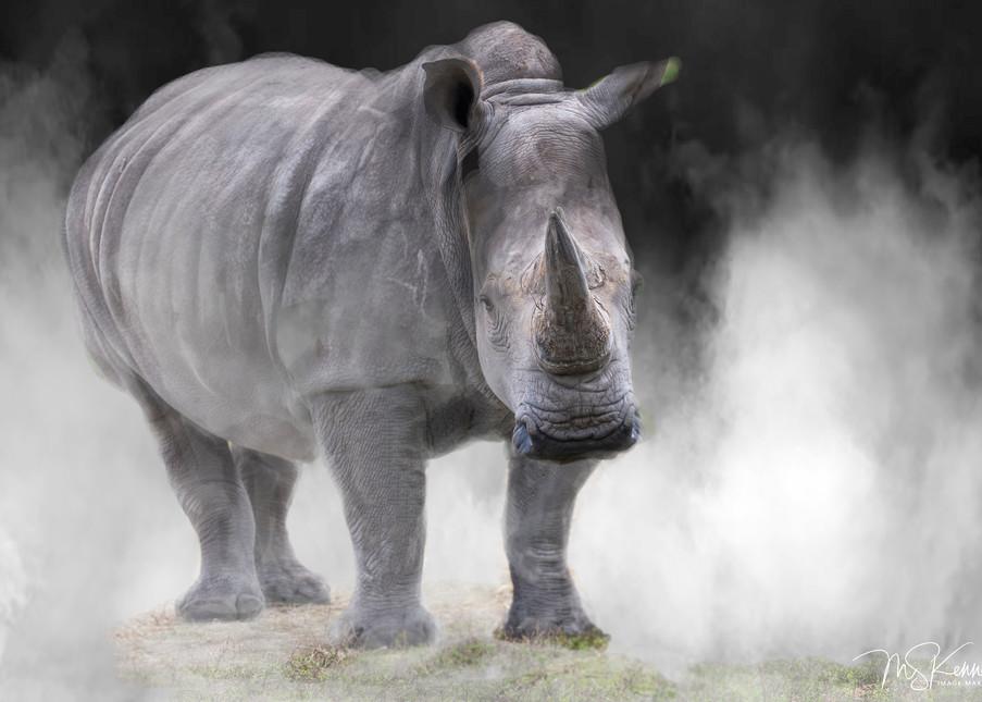 Rhino Art | Cutlass Bay Productions, LLC