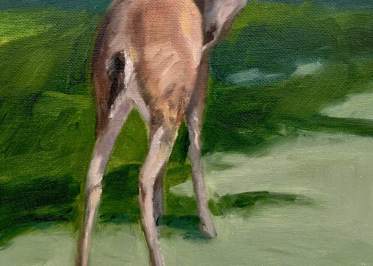 Riverhill Deer