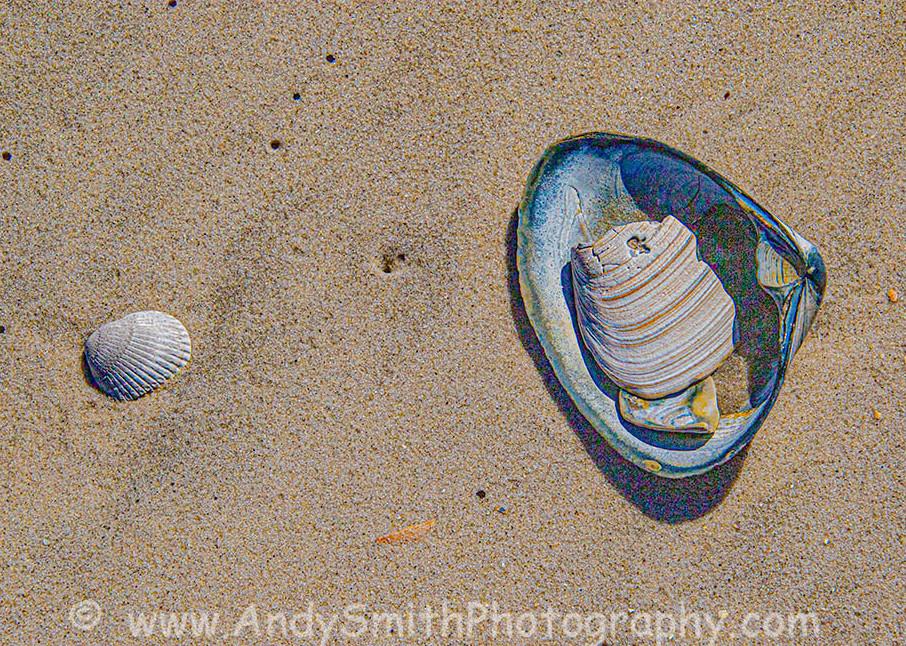 Shells at Island Beach