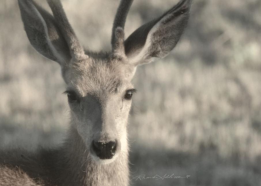 Baby Buck Art