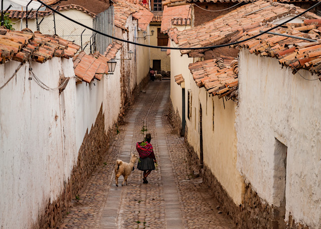 Andean woman with alpaca