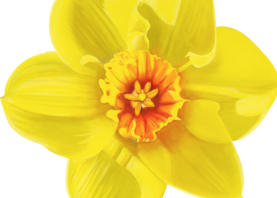 Daffodil  Art   Leanne Hanson Art