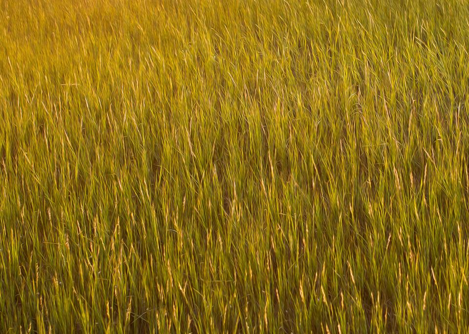 Carolina Marsh Grass Photography Art   TERESA BERG PHOTOGRAPHY