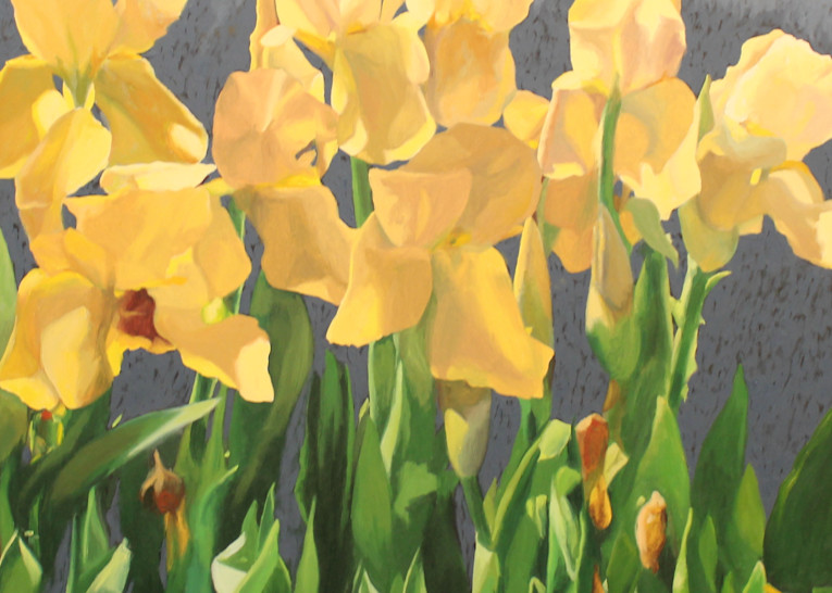 Yellow Iris, 2 Art | Helen Vaughn Fine Art