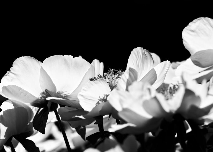 Asf 20190518 9425 M Photography Art   AnamariaSetti.art Photography