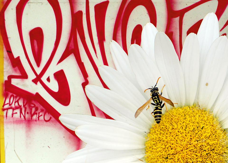 Graffiti Bee Photography Art | Xan Blood Walker Fine Art Photography