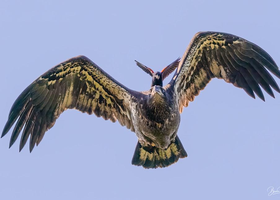 On Wings of Eagles III