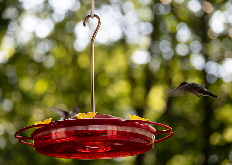 Hummingbirds Landing Photography Art | Blue Ridge Zen