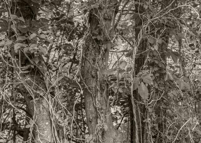Tree Rope Photography Art | Alina Marin-Bliach Photography/alinabstudios LLC