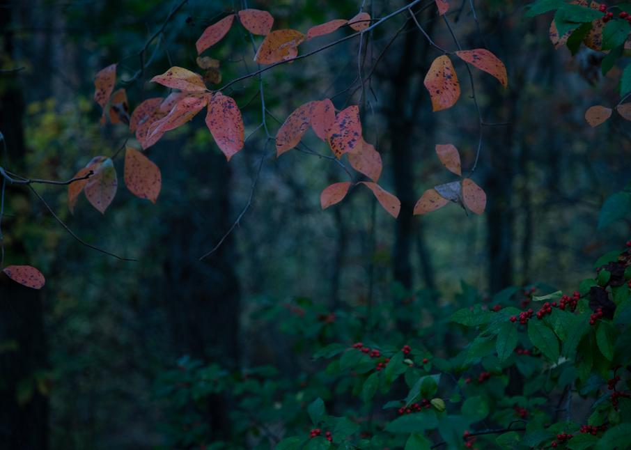Enchanted Forest Photography Art   Alina Marin-Bliach Photography/alinabstudios LLC