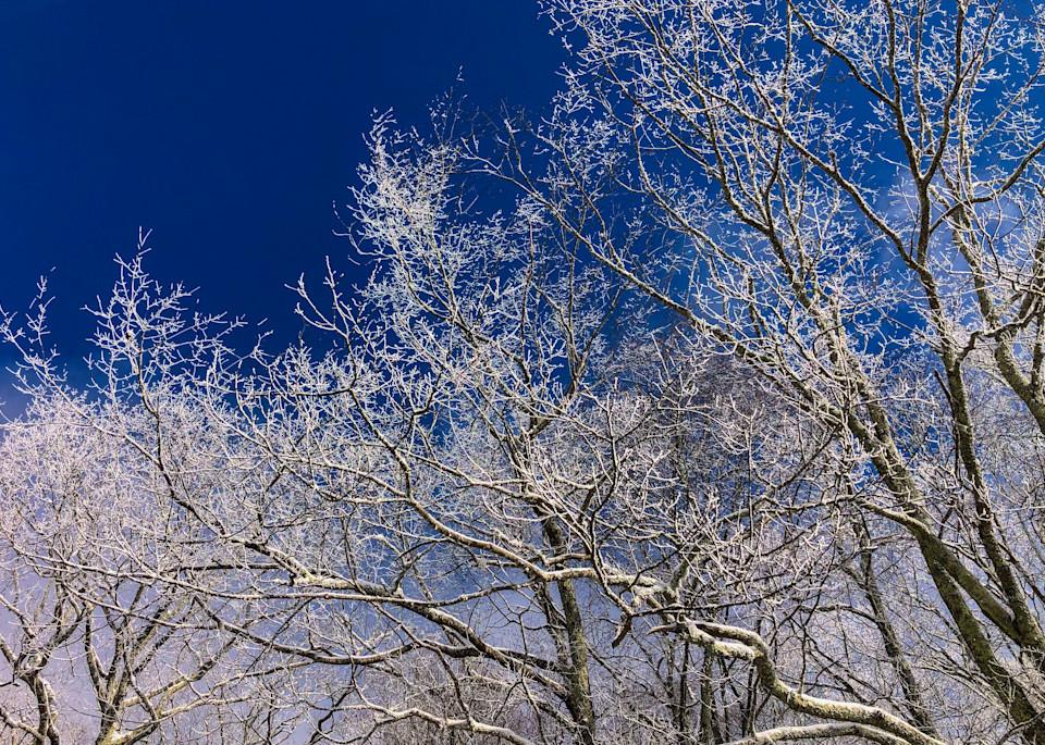 Rime Branches Photography Art | Blue Ridge Zen
