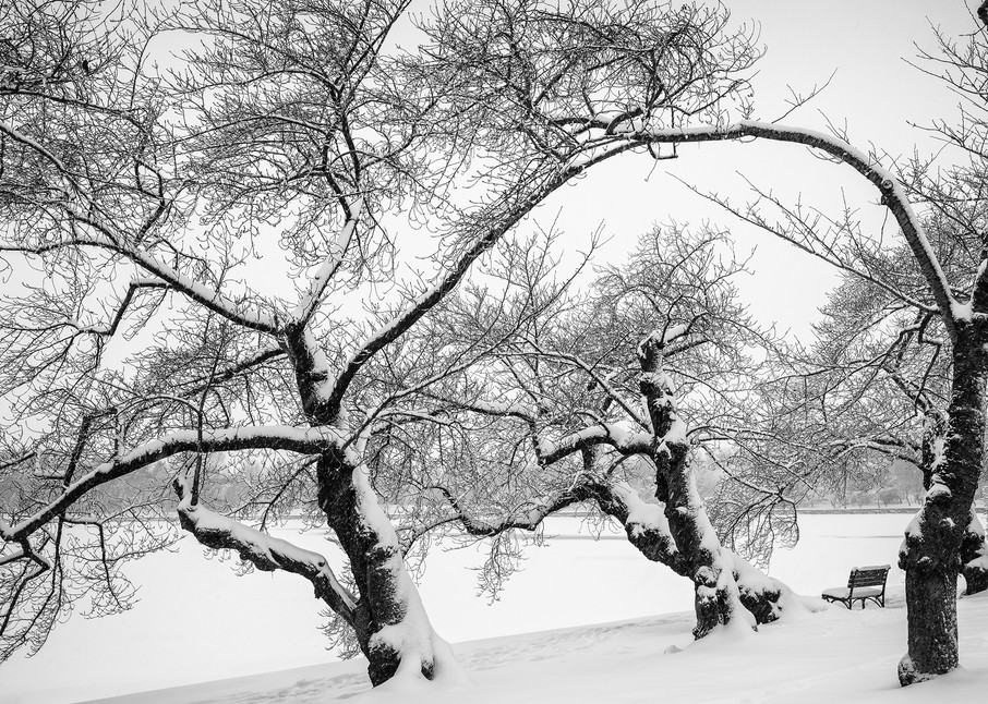 Winter Trees Photography Art | Sandy Adams Outdoorvizions Photography