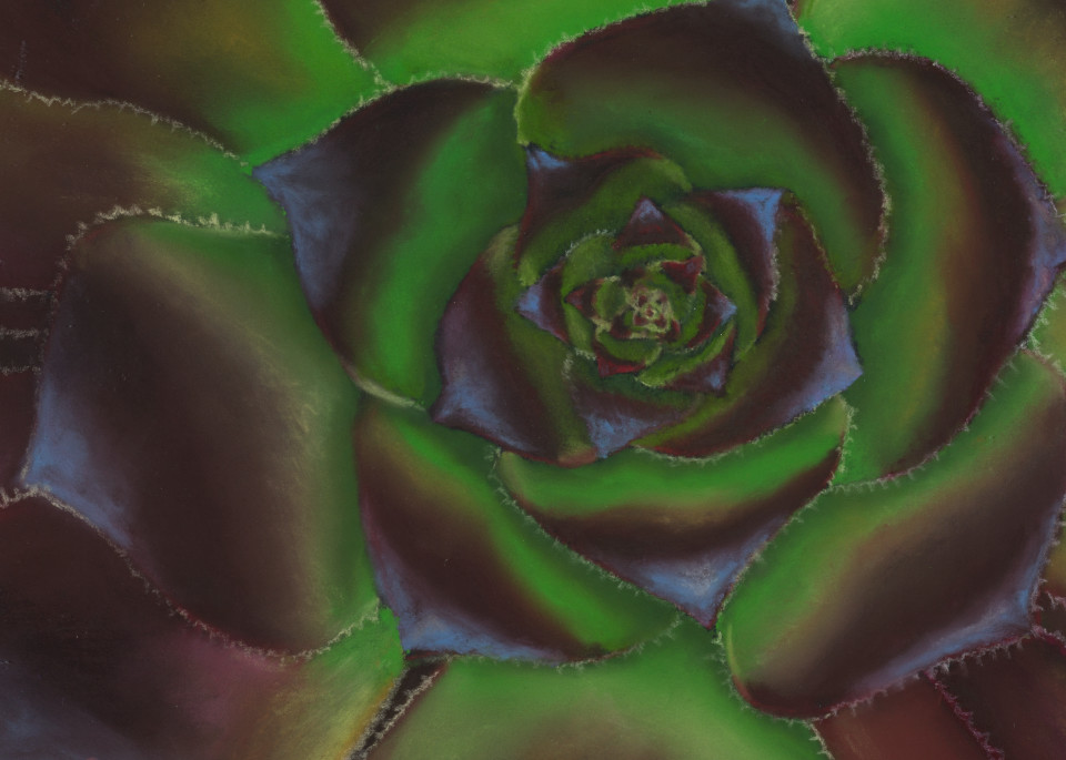 Succulent paintings, Aconium Zwartkop by Nancy Conant