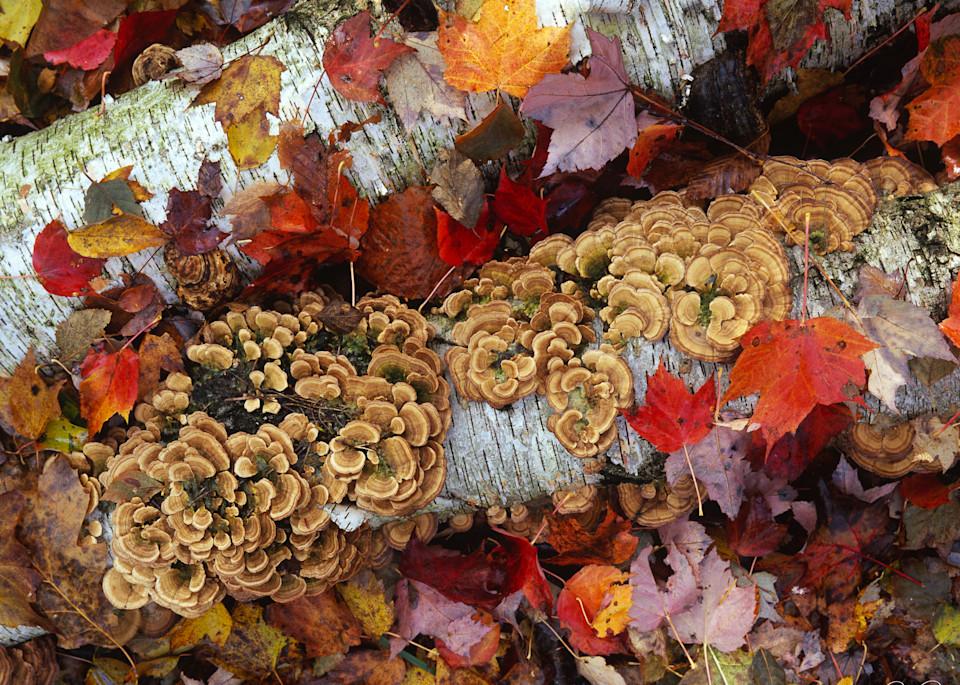 Autumn Riot