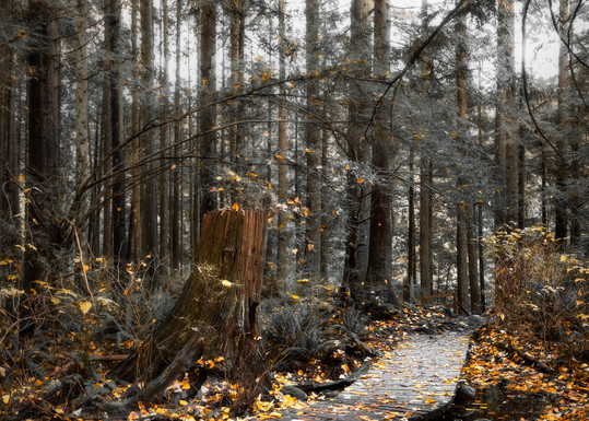 Lynn Valley Trail Art | James Alfred Friesen