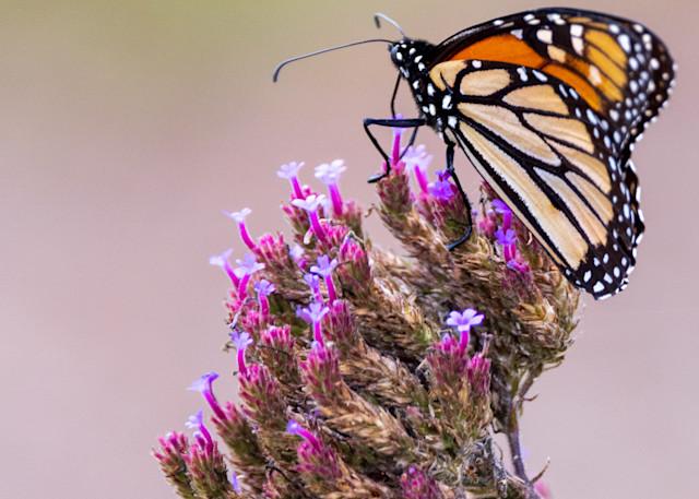 Monarch Crossing Photography Art | Thomas Yackley Fine Art Photography