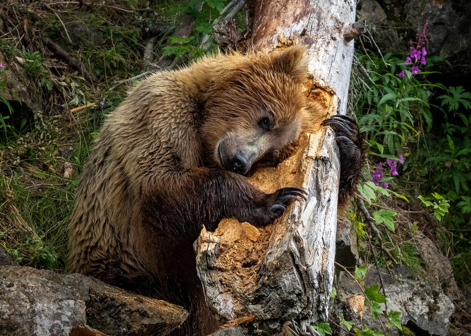 Tree Hugger Photography Art | Carol Brooks Parker Fine Art Photography