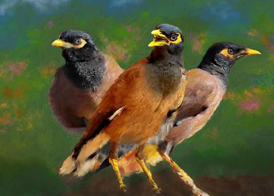Mynah Birds Art   Rick Peterson Studio