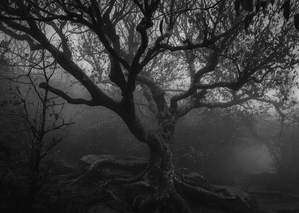 Craggy Birch - Noir