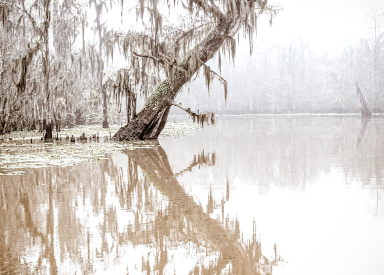Leaning in - Louisiana swamp fine-art photography prints