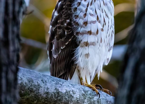 Raptor Calendar Photography Art   Charles Schmidt Photography, LLC