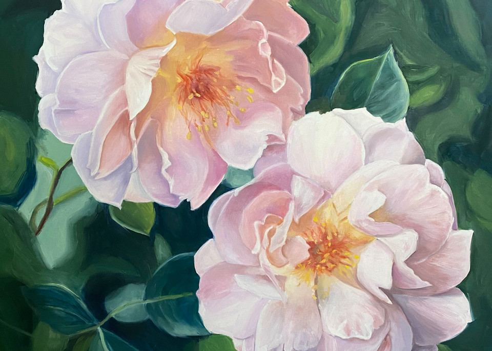 Pink Drift Roses