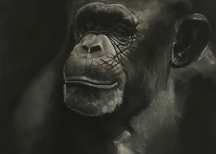 Chimpy Art | Dane Youkers Fine Art