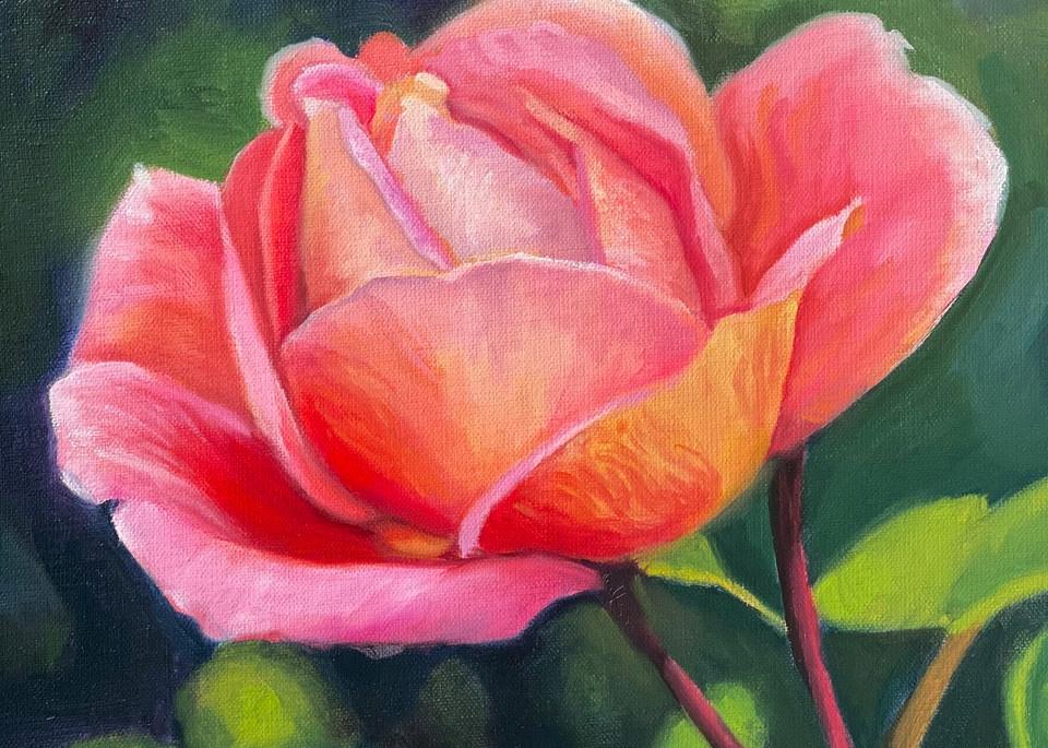 Pink Peace Rose Art | Jennifer Zardavets Art