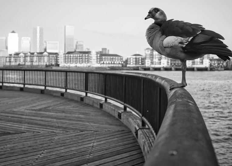 Infinigoose Art | Martin Geddes Photography