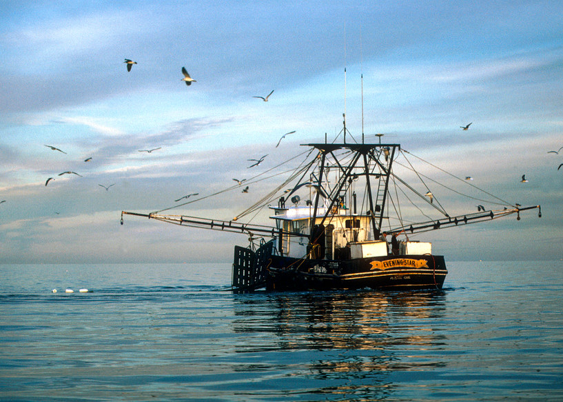 Evening Star Shrimp Boat with Arms Extended