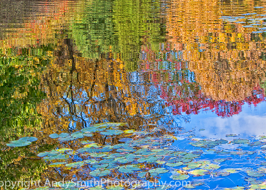 fine art photograph of Fall Reflection at Jenkins Arboretum