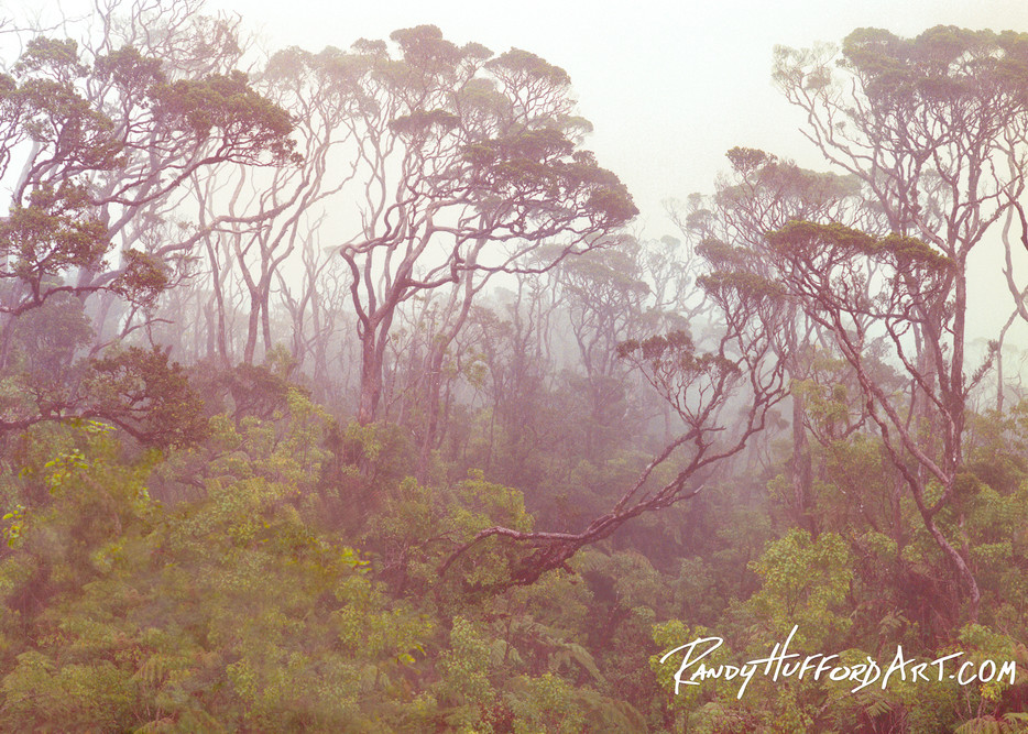Ohia Rainforest