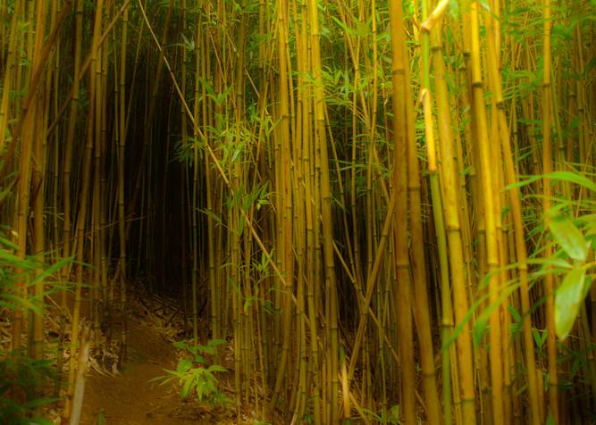 Pathway To Spiritual Enlightenment