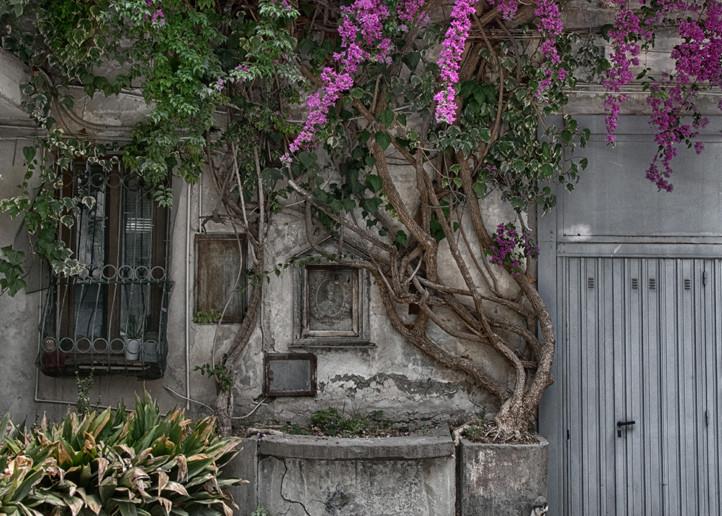 Bougainvillea Di San Ferdinando Photography Art | Michael Sandy Photography