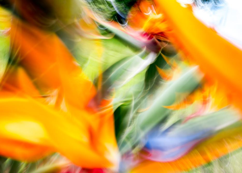 Paradisaeidae Photography Art | allysonmagda
