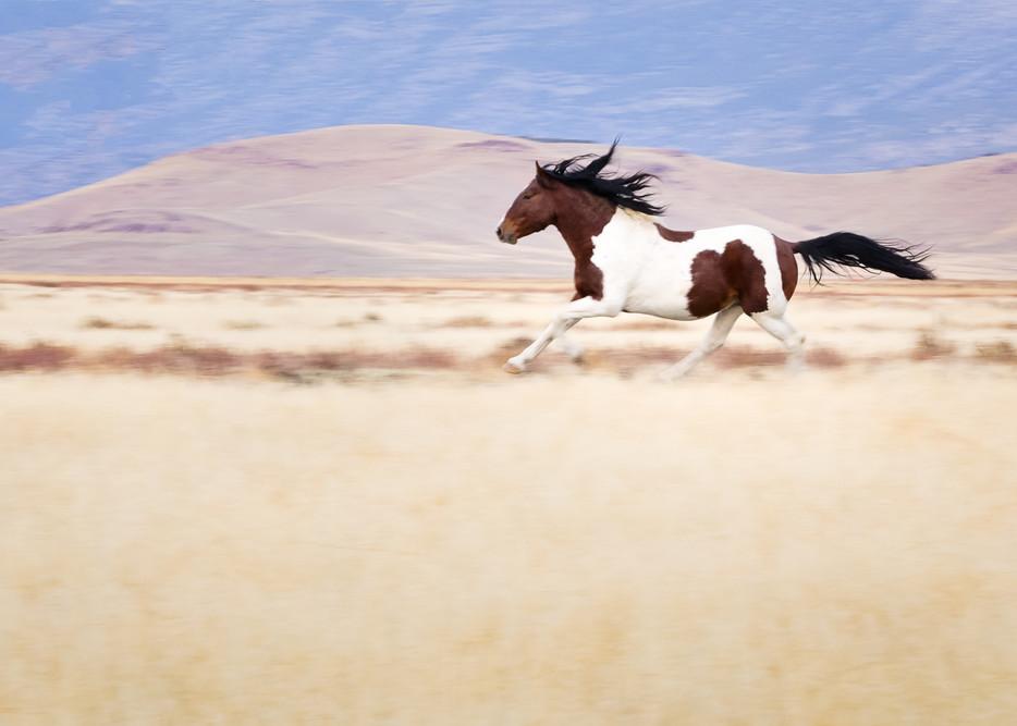 Running Dream Photography Art | Sierra Luna Photography