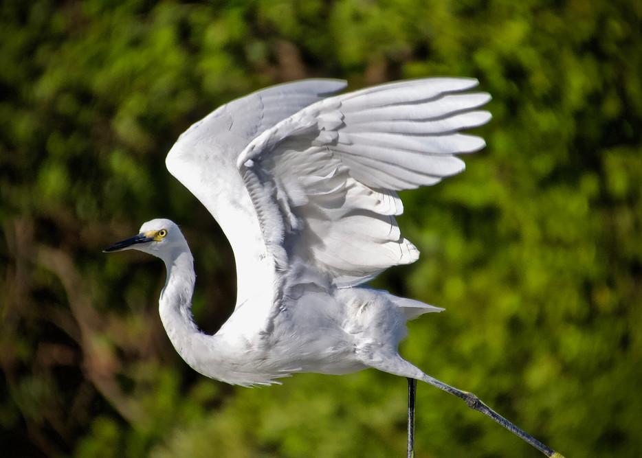 Fantasy Flight Photography Art | CJ Harding