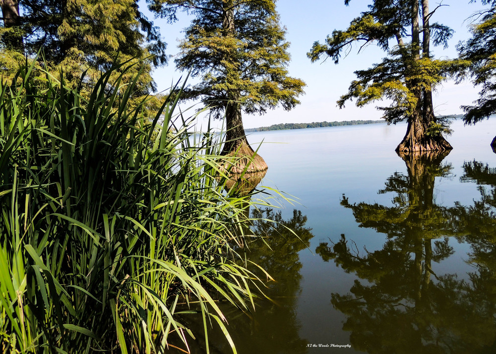 Reelfoot Lake Shoreline Photography Art   N2 the Woods Photography