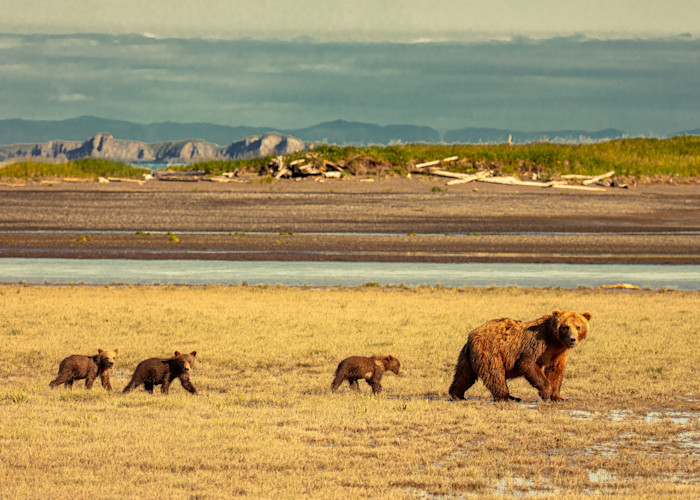 Following The Leader Photography Art   Brokk Mowrey Photography