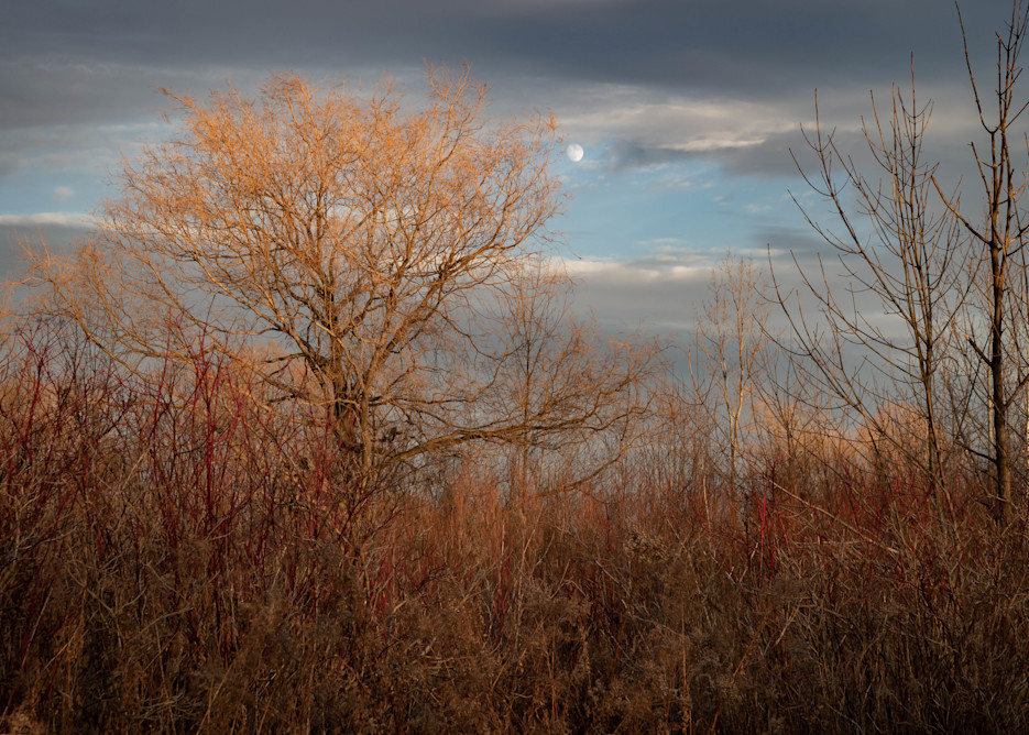 Autumn Afternoon Photography Art | Elizabeth Stanton Photography