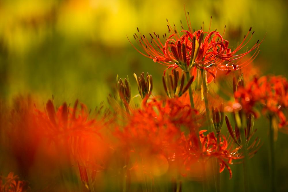 Equinox Flowers 2006 #1