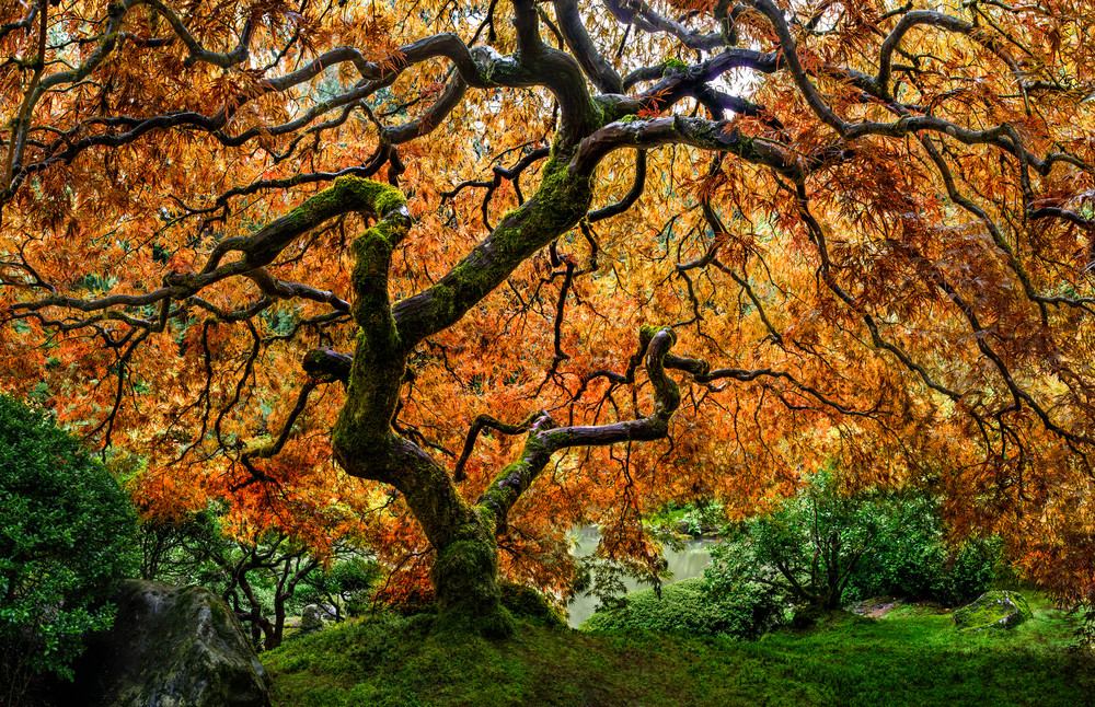 Tree of Zen in the Portland, OR Japanese Garden