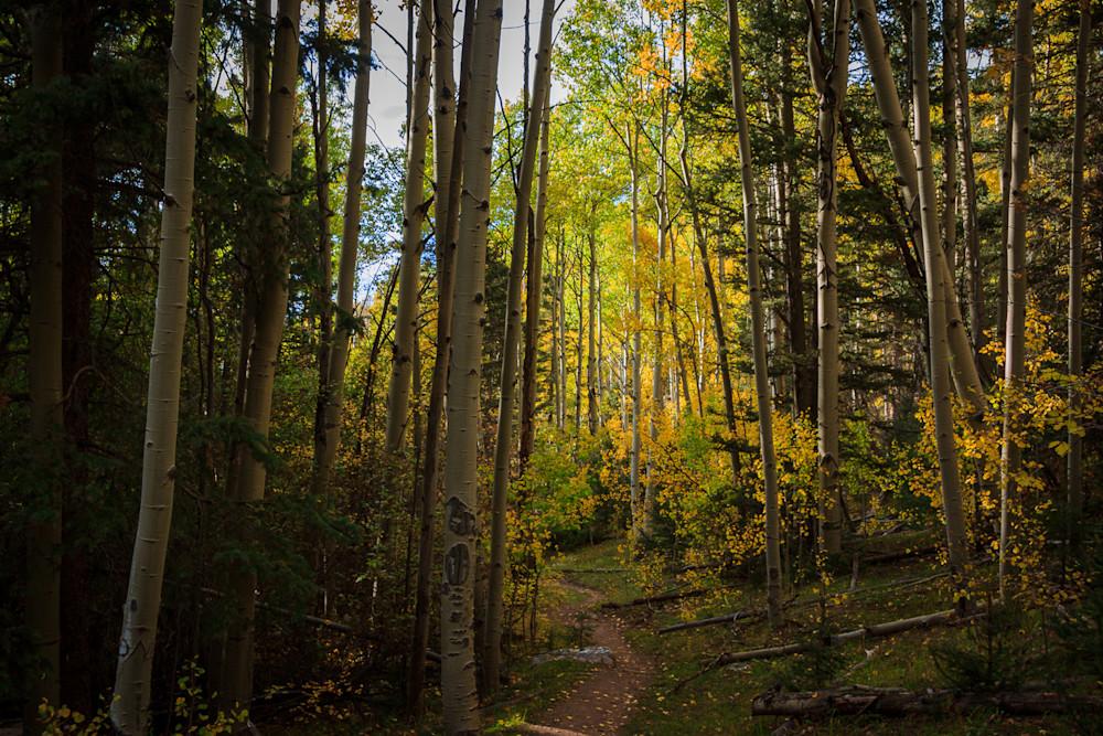 Landscape, Photography, Santa Fe, forest, New Mexico, Southwest