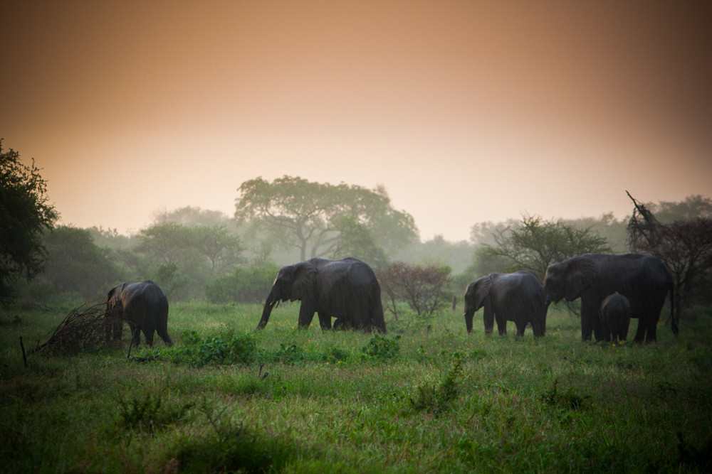 Africa, photography, elephants, South Africa, African Wildlife, Kruger National Park