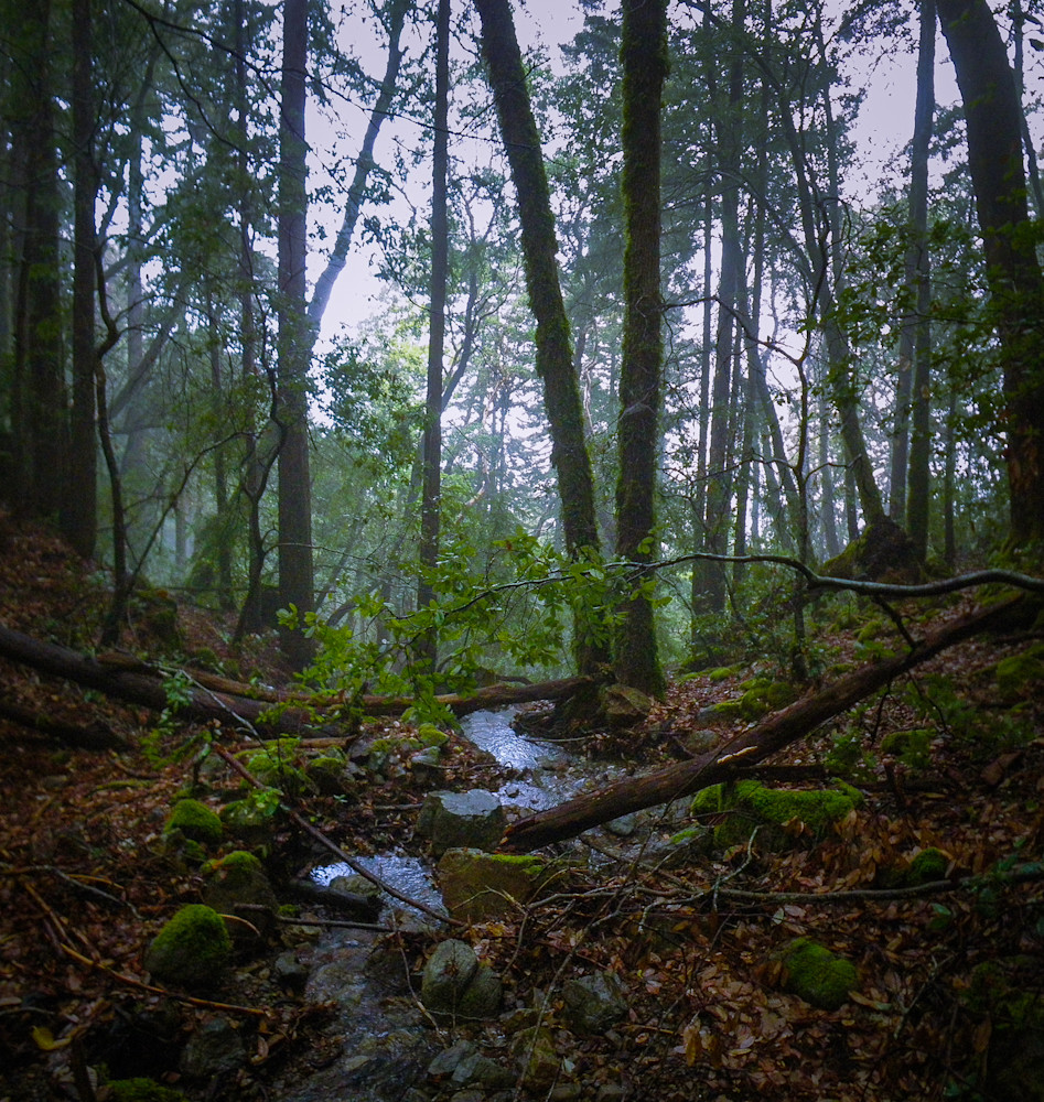 Photography, California, forest, landscape, Marin County
